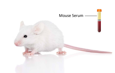 What is mouse serum